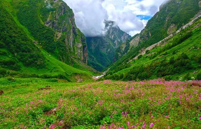 Le Parc national de la Vallée des fleurs dans l'État de l'Uttarakhand